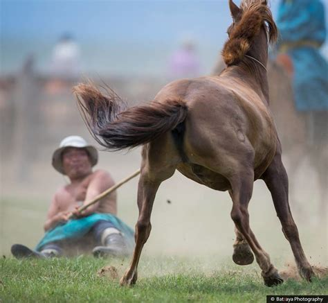 horse culture captured ancient mongols unchanged nomadic mongolia bored showing