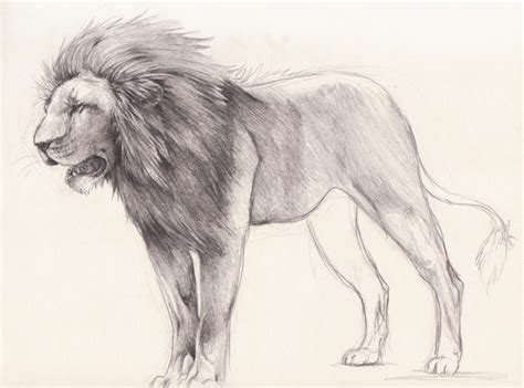 Lion Sketch By Xmits On Deviantart