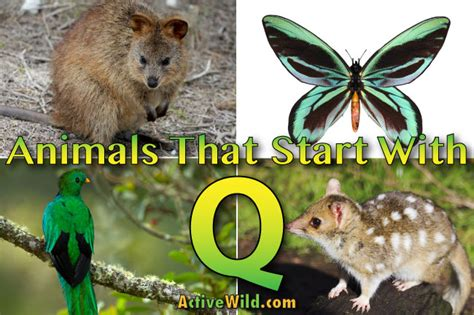 The whimsical tradition resulted in an annual guessing game, but this year will be the last. Animals That Start With Q: List Of Amazing Animals Beginning With Q