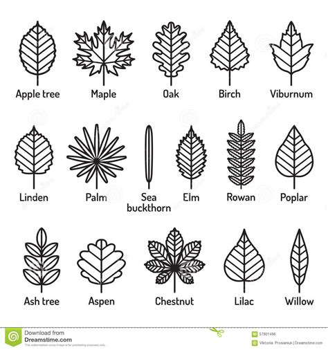 leaves types  names icons vector set outline black