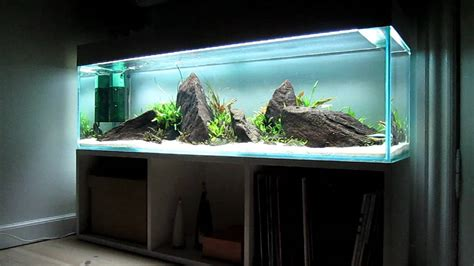 aquascape lowtech youtube