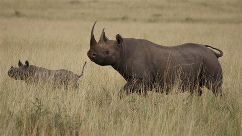 rhino wallpapers high quality