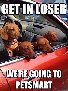 Best 25+ Dachshund Meme ideas on Pinterest | Funny puppies ...