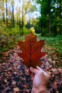 Yellow Leaf · Free Stock Photo