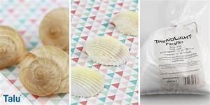 Fischernetz Mit Muscheln : mit muscheln dekorieren deko fischernetz x m beige mit muscheln anker cool wunderschn ~ Sanjose-hotels-ca.com Haus und Dekorationen