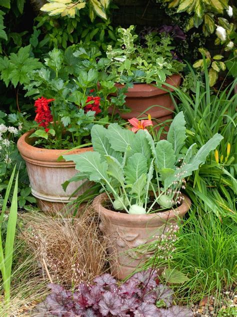 edible container garden plants  images vegetable
