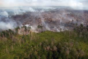 indonesian forests burn  anti fire agency feels