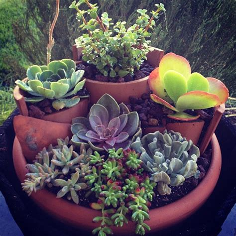 tiered succulent container garden flickr photo