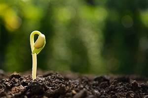 Plantes Et Jardin : jardin troquez vos graines et plantes sur internet ~ Melissatoandfro.com Idées de Décoration