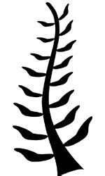 Adinkra Symbols of West Africa: Nyame Nti