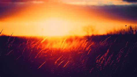 grass sunset golden hour nature wallpapers hd desktop