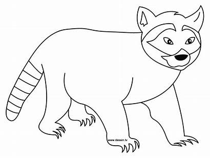 Raccoon Coloring Pages Drawing Outline Printable Template