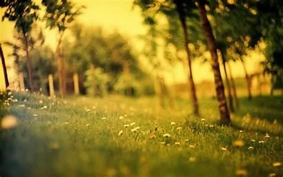 Summer Wallpapers Desktop Forest Para Trees