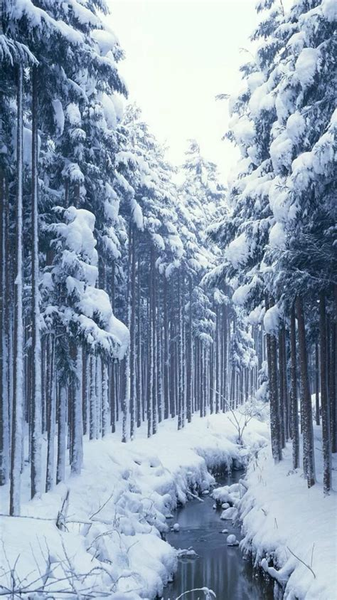 snow covered forest creek iphone  wallpaper hd