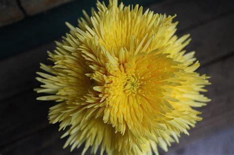 Diy Flowers Weddingbee