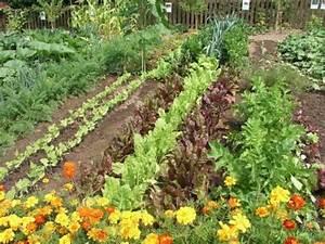 Mischkultur Im Garten : die besten 17 ideen zu mischkultur auf pinterest bepflanzung g rtnern und pflanzung eines garten ~ Orissabook.com Haus und Dekorationen