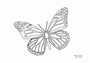 Dessin Facile Papillon : coloriage papillon facile colorier dessin gratuit imprimer ~ Melissatoandfro.com Idées de Décoration