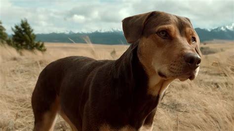 dogs  home teaser trailer