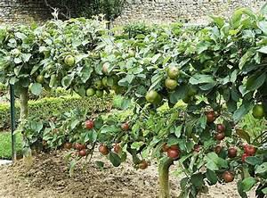 Arbre A Fruit : choisir la taille d 39 un arbre fruitier en fonction de sa surface ~ Melissatoandfro.com Idées de Décoration