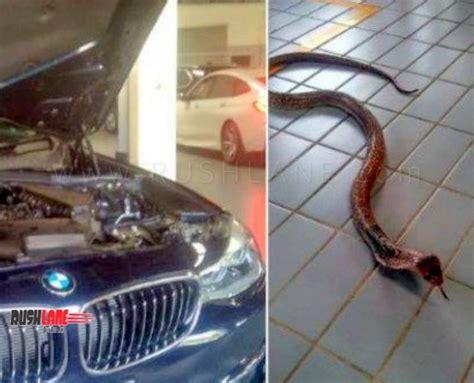 bmw  series owner hits  snake  road