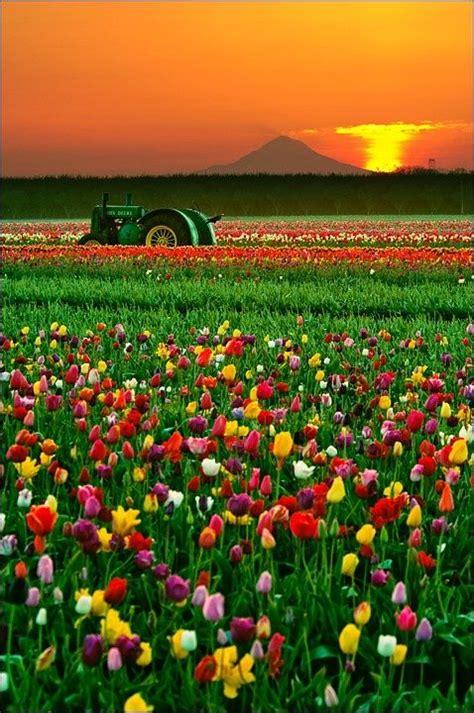 tulip farms in usa 25 melhores ideias de 193 rvore da vida pintura no pinterest arte final da 225 rvore da vida
