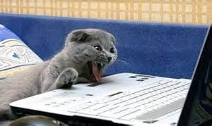 cat laptop laptop cat daily picks and flicks