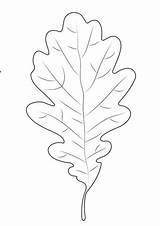 Leaf Oak Coloring Printable Pages Supercoloring Categories sketch template