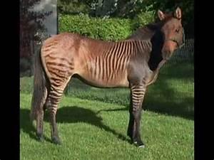10 Creepy Animal Mutations - Weird Birth Mutations - De ...