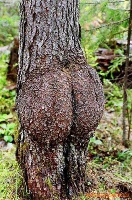 latest funny pictures funny trees pictures