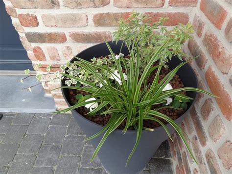 plante exterieur ombre en pot quel le arbuste plante en pot 224 l ombre 21 messages