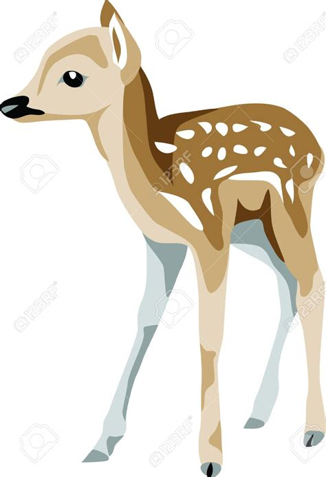 fawn feeding clipart clipground