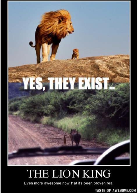 Lions Super Bowl Meme - superbowl lion king meme detroit lions