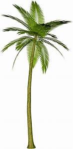 Palm Tree Cartoons - Cliparts.co