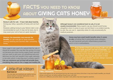 can cats have honey for a cough