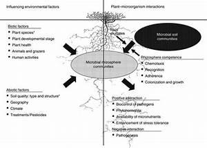 Influencing factors of rhizosphere microbial communities ...