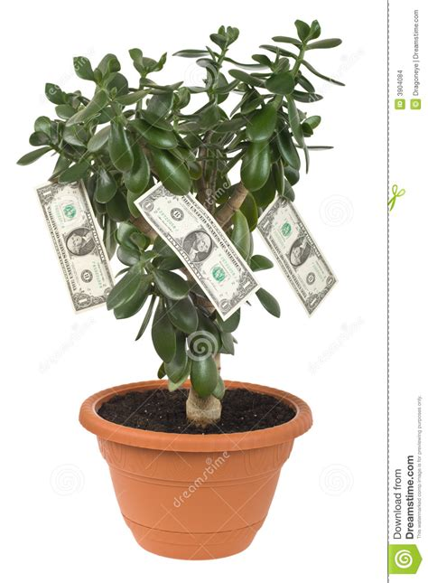 recorte de la planta del dolar foto de archivo imagen de