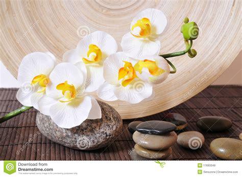wellness entsteint orchideen stockbild bild