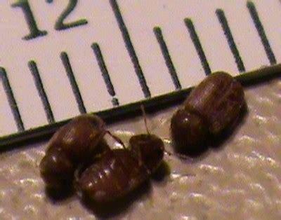 rid  bugs   kitchen thriftyfun