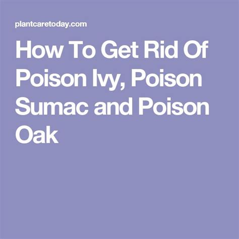 how to get rid of poison sumac best 25 poison oak ideas on pinterest poison oak plant slogan about health and slogans on nature