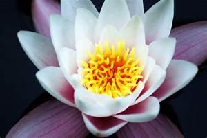 Schöne Bilder Kaufen : sch ne natur foto bild natur pflanzen youth bilder auf fotocommunity ~ Pilothousefishingboats.com Haus und Dekorationen