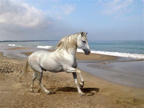 horse horses fanpop pony mare pretty equestrian photographs cavalo photograph pre