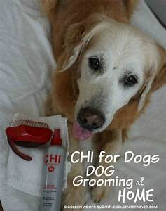 dog grooming at home with chifordogs golden woofs With dog grooming at home