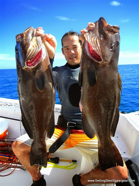 grouper spearfishing trophy miami want read