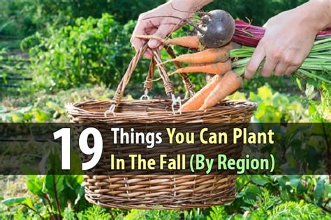 what can you plant in the fall 19 things you can plant in the fall by region shtf prepping homesteading central