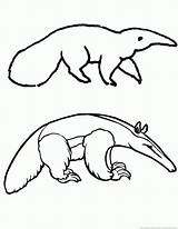 Anteater Animal Coloring 123coloringpages sketch template