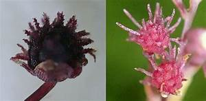 New Species Of Parasitic Plant That Lives Off Fungi Found