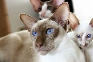 Was Brauchen Katzen : was katzen brauchen tierfreund ~ Lizthompson.info Haus und Dekorationen
