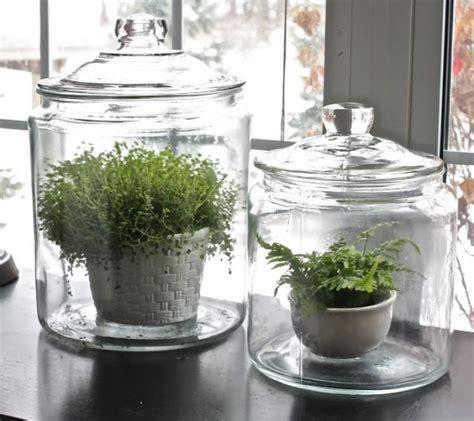 plants   home part  terrariums