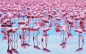 Weird Wonderful World News: Flamingos in the wild