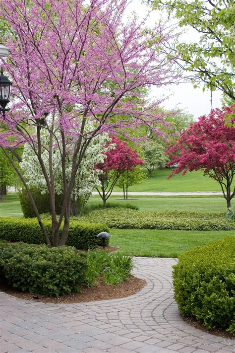 small ornamental trees image gallery ornamental trees for landscaping